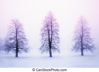 Winter trees in fog at sunrise