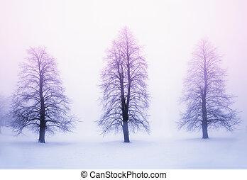 Winter trees in fog at sunrise