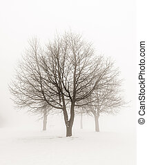 Winter trees in fog