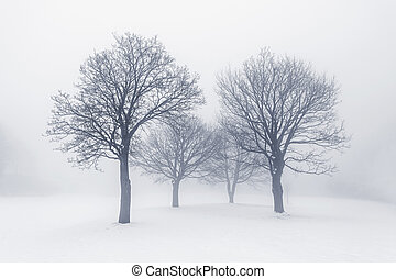 Winter scene of leafless trees in fog