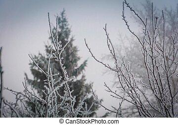 Winter trees in hoarfrost