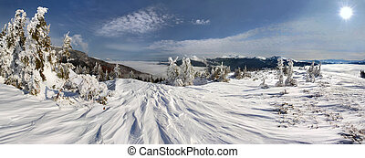 Winter trees in mountains covered w
