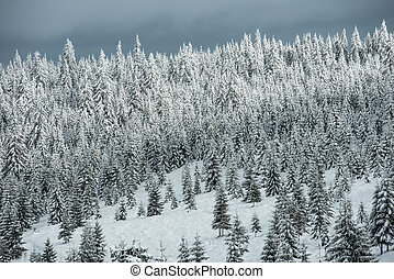 Winter trees in mountains covered with snow