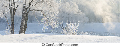 winter trees near a river covered with hoar at morning lit with sunlight