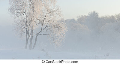winter trees near a river
