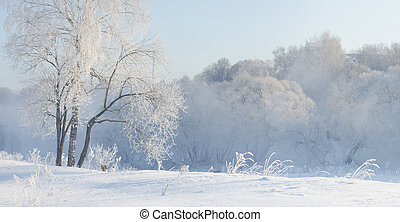 winter trees near a river