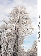winter trees on a cold day