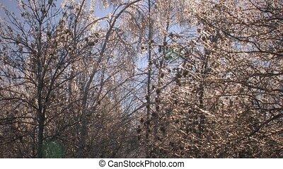 Winter trees on blue sky backgroun