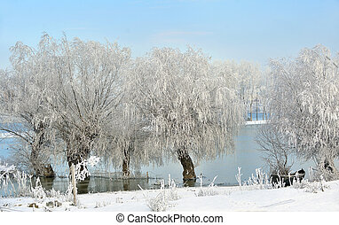 Winter trees on Danube river