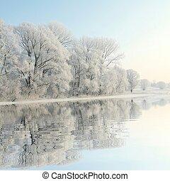 Winter trees on the lake shore