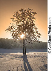 Winter trees - Winter in the Black Forest in Germany