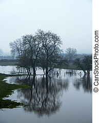 Winter trees reflected in a flooded field near York, England