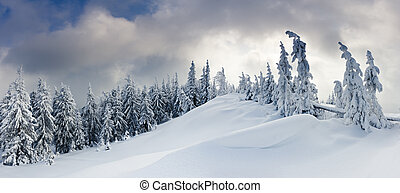 winter trees - Trees covered with hoarfrost and snow in...