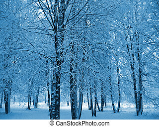winter trees - trees in a winter park