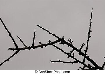 winter twigs silhouette