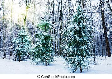 winter., urbano, neva-coberto, silencioso, parque, rússia