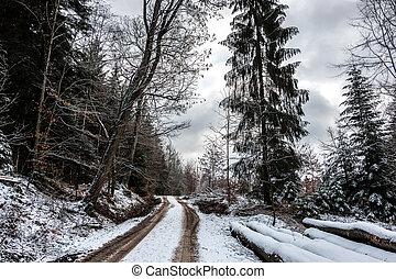 winter, verschneiter , waldland, mitte, forsten pfad