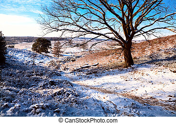beautiful view on hills covered with snow and tree over blye sky