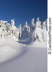 Winter view of snow covered trees