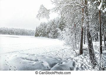 Winter view of the Tukhka lake. Karelia. Russia