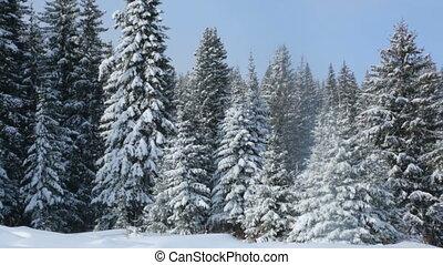 winter, wald, landschaftsbild
