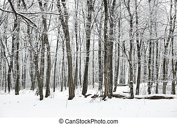 winter, wald