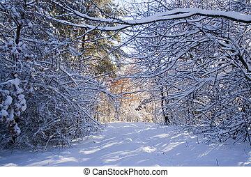 winter, wald