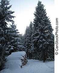 winter, wandeling