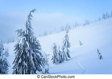 Winter weather in the mountain spruce forest