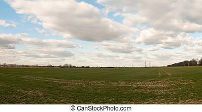 winter wheat on a field