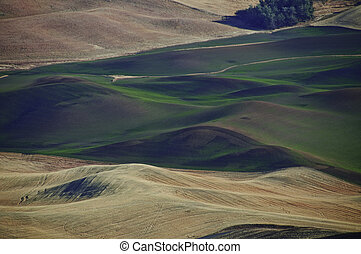 Winter Wheat - Rolling farm fields in palouse, The winter ...