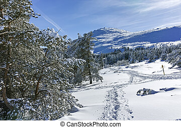 Winter wiew of Vitosha Mountain, Bulgaria
