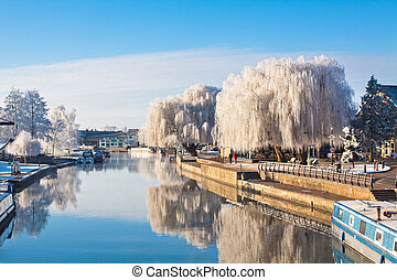 Winter willow tree at the riverside
