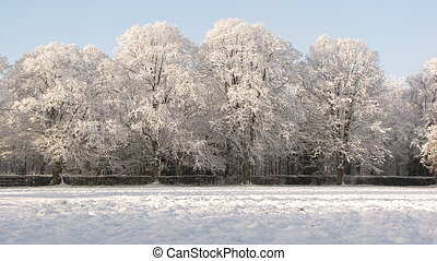 Winter Wonderland - a rows of trees covered in snow