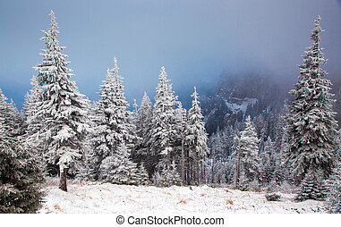 Christmas background with snowy fir trees in the mountains