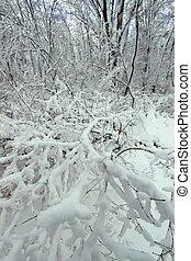 Winter Wonderland - Illinois