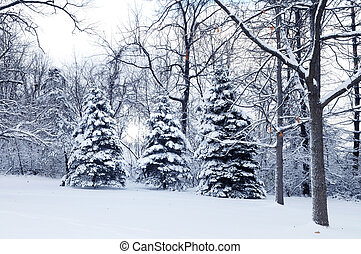Landscape with snow and light shinning through the trees.