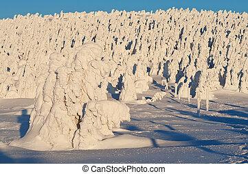 Winter Wonderland - Winter wonderland during the beautiful...