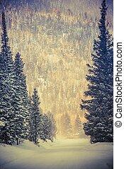 Winter Wonderland Road