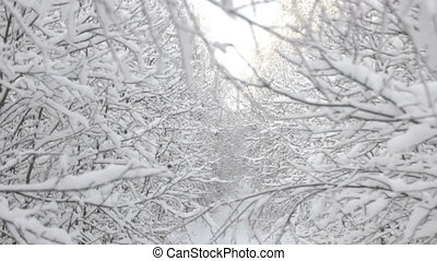 winter wonderland scene woods white sunny day in forest with...