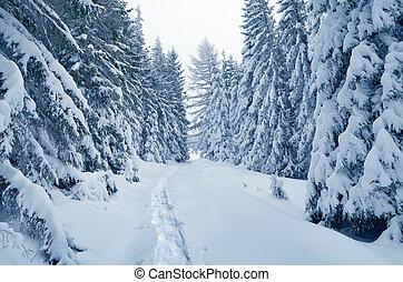 Winter wonderland - Christmas landscape. Winter Wonderland....