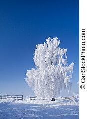 Winter wonderland with whitefrost tree