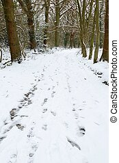 Winter woods - Snowy English forest with trail of footprints