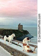 winter, zwei, castle strand, hunden, ansicht