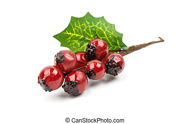 winterberry Christmas branch with red holly berries