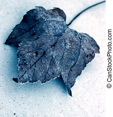 Winterized Leaf