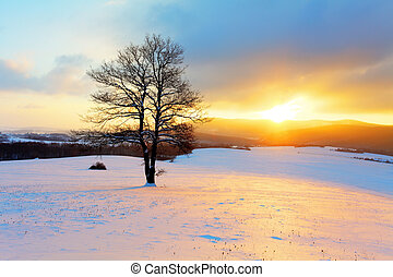 winterlandschaft, in, schnee, natur, mit, sonne, und, baum
