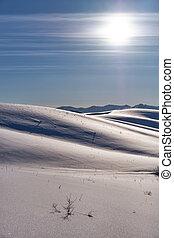 winterlandschaft, mit, fersen, unter, schnee, mit, sonne, auf, blauer himmel
