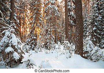 winterlandschaft, mit, sonnenuntergang, in, der, wald