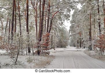 winterlandschaft, mit, wald, straße, und, bäume, bedeckt,...